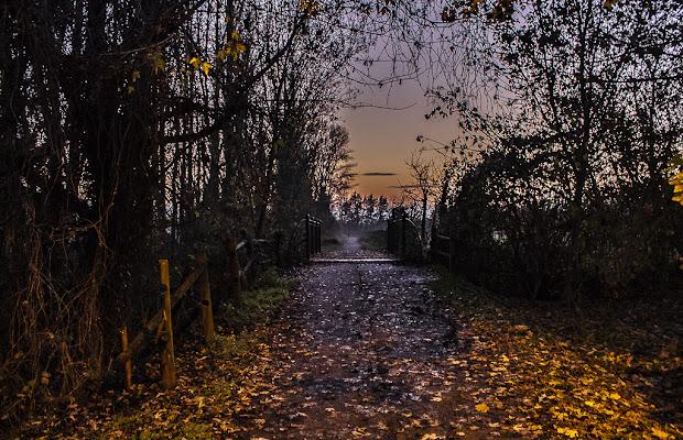 Nel mezzo del cammino di nostra vita, mi ritrovai in una selva oscura... di Mark_Bert_ph
