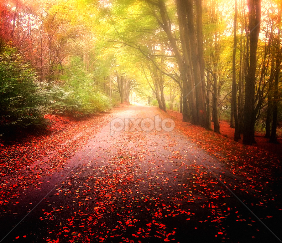 Colors in the Mist by Teddy Tavares - Landscapes Forests ( mosvatnet, pwcautumn, stavanger, travel, norway )