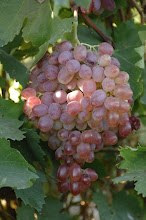 Photo: Grape
