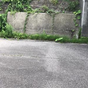アクア NHP10 Sグレードのカスタム事例画像 Yuuki ROWENさんの2020年07月20日20:19の投稿