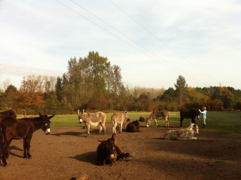Workshop voor Hoogsensitieve Jongeren (10+): De ezel is een prikkelslikkerdier