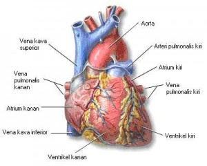 Herbal Sakit Jantung Bengkak