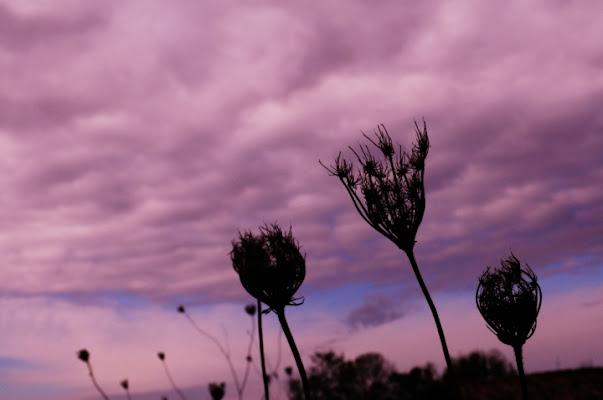 Camporeale natura semi morta di emykrania