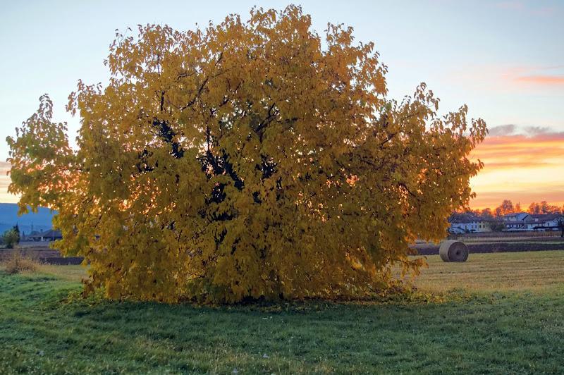 giallo di clarin65
