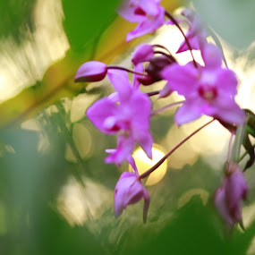 sand orchid by Alnia Furwani Maulina - Illustration Flowers & Nature (  )