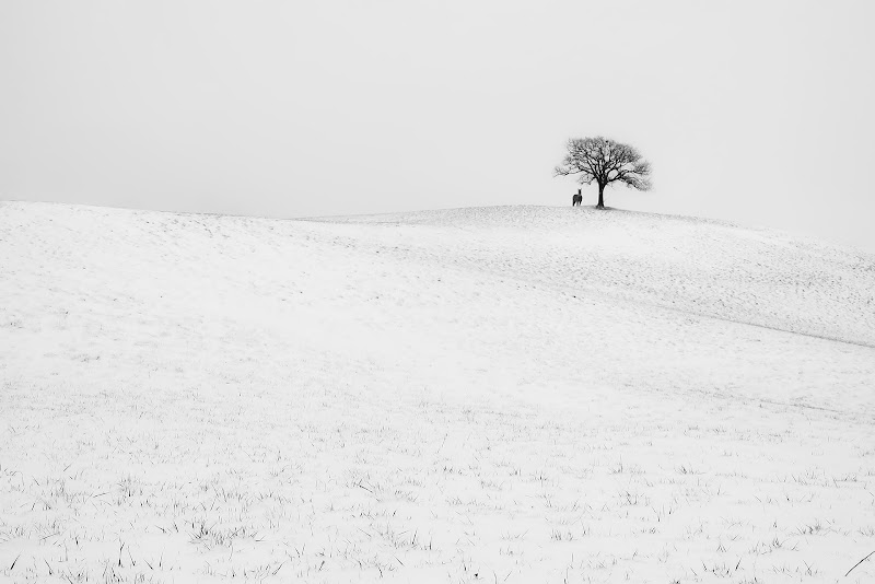 neve in collina di fabio_sartori