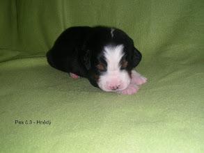 Photo: pes č.3      HNĚDÝ