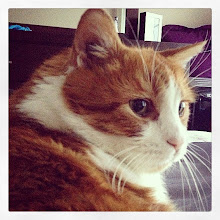 Photo: Mr. Tom portrait, November 2014 #intercer #cat #cats #pet #pets #portrait #cute #beautiful #petsofinstagram #catsofinstagram #orange #white #eyes #ears #nose - via Instagram, http://ift.tt/1xuP0uI