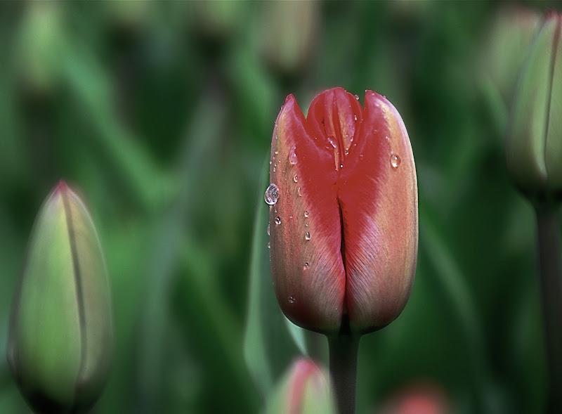 In fiore di Susy65