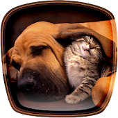 Cats and Dogs Live Wallpaper