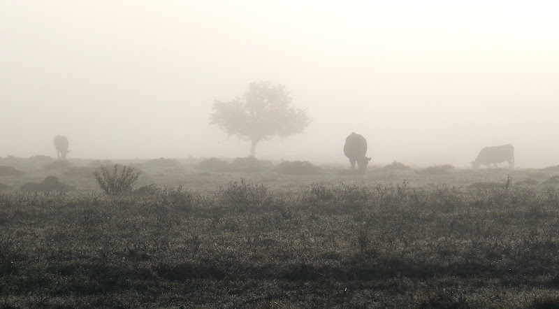 In the fog di braxittu