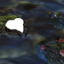 Heart of snow by Zeljko Padavic - Nature Up Close Water (  )