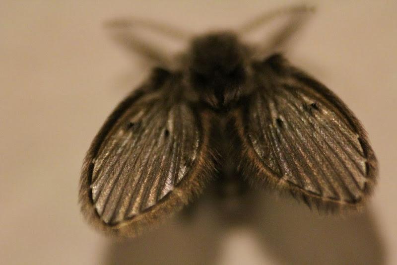 Wings di PW Photo
