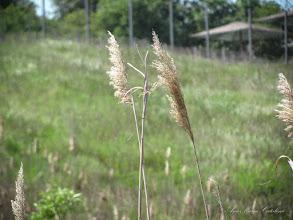 Photo: 2016.05.15 - In zona Durgau, Valea Sarata, lacul 6