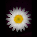 Divination on a Daisy icon