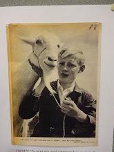 Photo: Zo moet een goed verzorgde geit er uit zien, zegt Aart van Gemert.