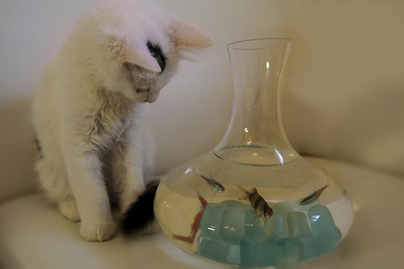 Icaro e i pesci di Phoebe