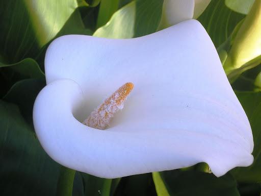 Flores, Setúbal