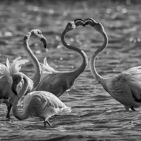by Mauro Rotisciani - Black & White Animals