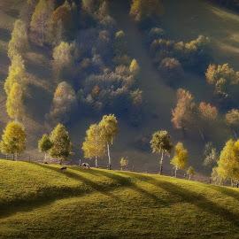 Beauty of fall by Radita Watkinson - Landscapes Mountains & Hills