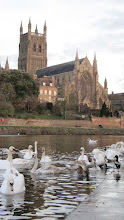 Photo: Swan Sanctuary across from the cathedral