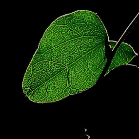 Green leaf by Rajashri Joshi - Uncategorized All Uncategorized ( green leaf, green sunlight veins background )