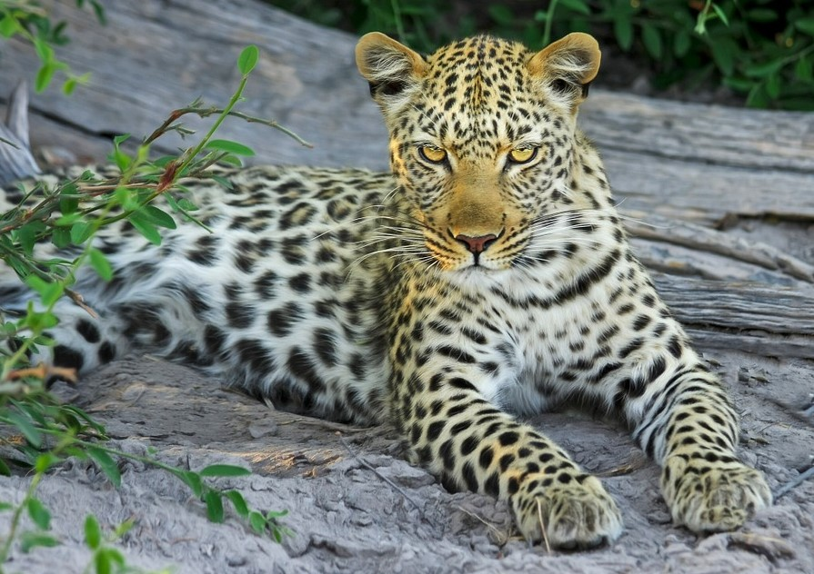 Gir National Park and Wildlife Sanctuary