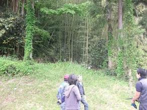 Photo: 払川へ向う途中の竹林で本部用の竹を2本切り出し。