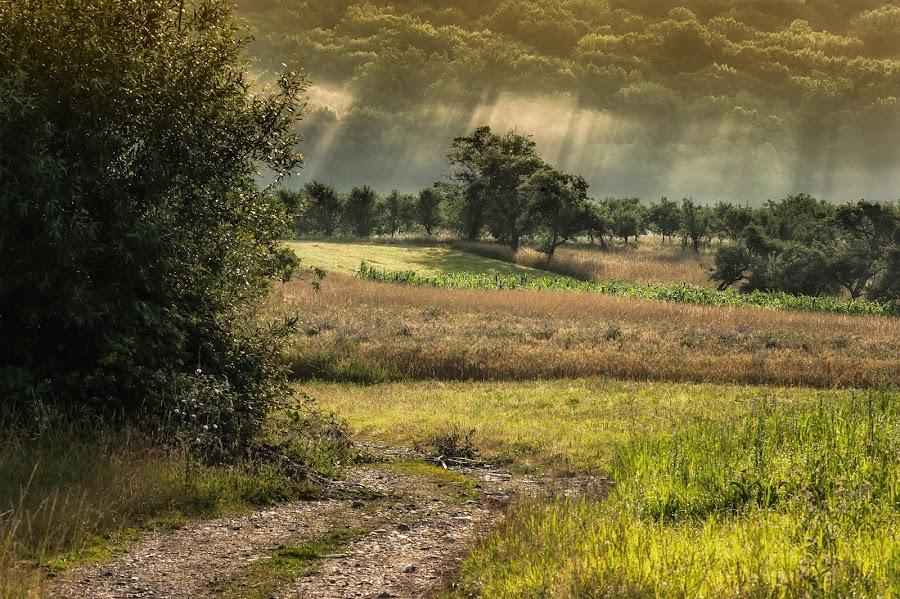 by Kalmar Zoltan - Landscapes Mountains & Hills