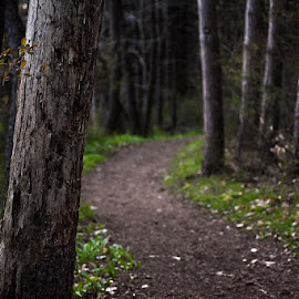 by Jessica Eirich - Landscapes Forests
