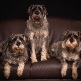 Family Portrait. by Susan Pretorius - Animals - Dogs Portraits