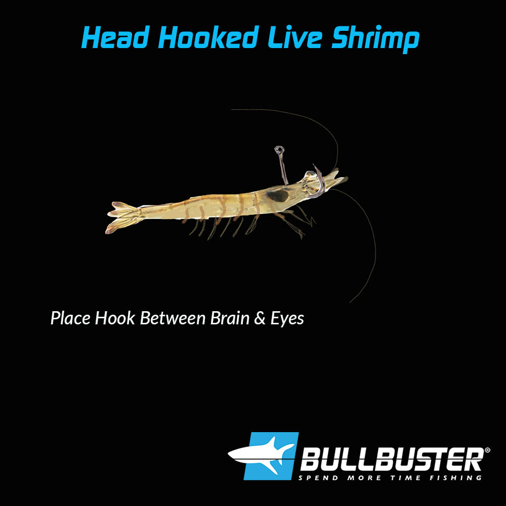 Hooking Live Shrimp In The Head