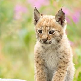 by Anngunn Dårflot - Animals Other Mammals