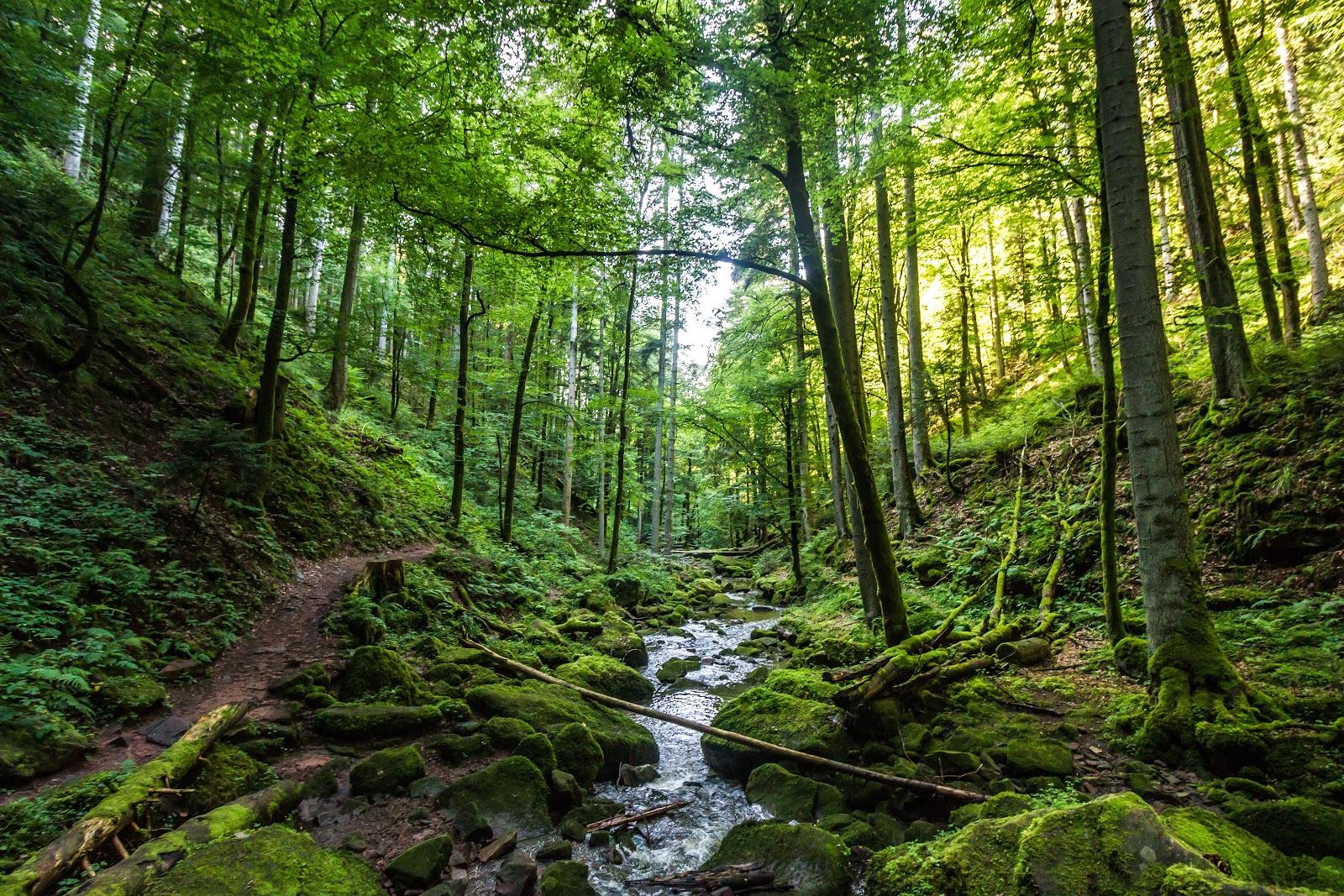 Wander Highlights im Schwarzwald