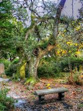 Photo: Old Burying Ground - Photo courtesy Lisa Margolis