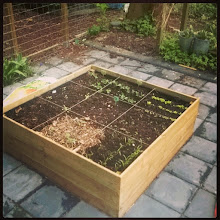 Photo: raised bed 26-4-15, rucola, french bean, salads, carots, beans, brocolis, spinach
