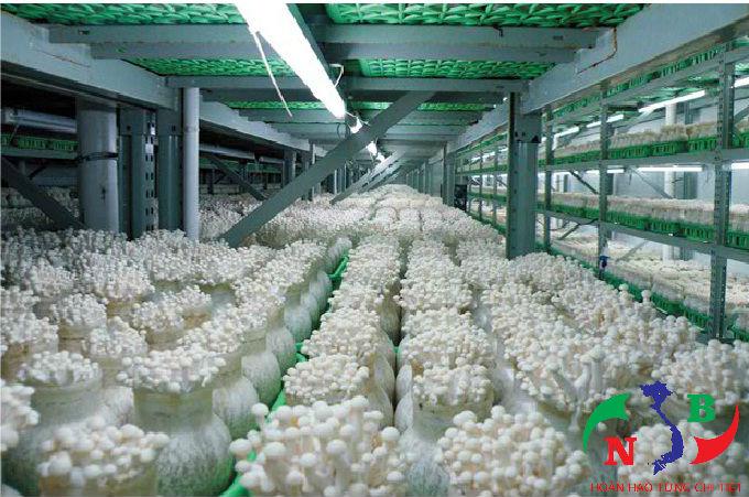 Những điều cần biết về kho lạnh bảo quản nấm