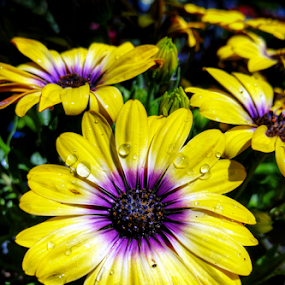 among the many by Todd Reynolds - Flowers Flower Gardens (  )