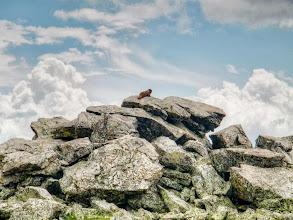 Photo: Marmot on 10 Mile