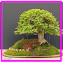 Bonsai Tree Ideas APK icon