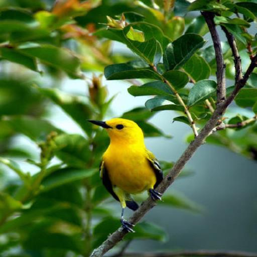 خلفيات طيور جميله