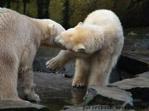Photo: Und Knut erhaelt eines von Gianna :-)