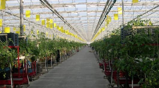 """""""CuTE"""" desmonta cinco fake news sobre el cultivo en invernadero"""