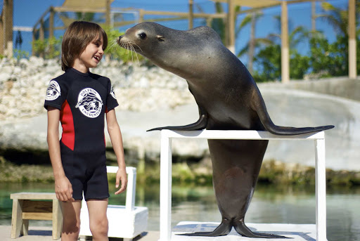 Have a fun sea lion encounter while visiting Paradise Island in the Bahamas.
