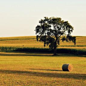 Kašljavac by Slaven Bandur - Landscapes Prairies, Meadows & Fields ( hill, hay, field, nature, tree, shadows, sunny, meadow )
