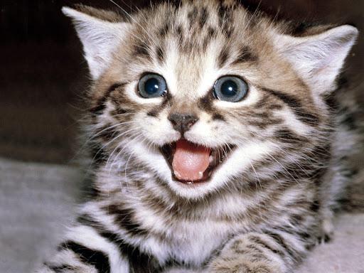 かわいい猫の壁紙