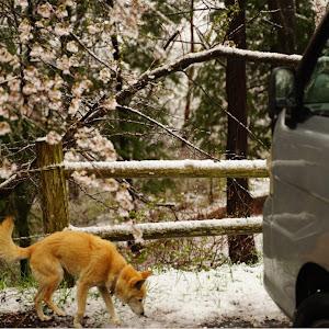 ハイゼットトラックのカスタム事例画像 つっちーさんの2020年03月29日14:01の投稿