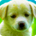 Photo Filters icon