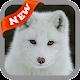 Arctic Fox Wallpaper