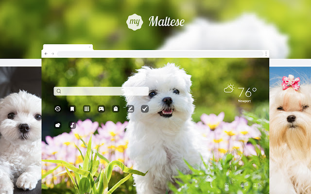 My Maltese HD Wallpapers New Tab